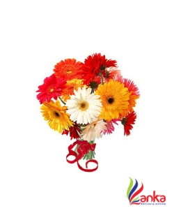 Multi Coloured Flower Gerberas